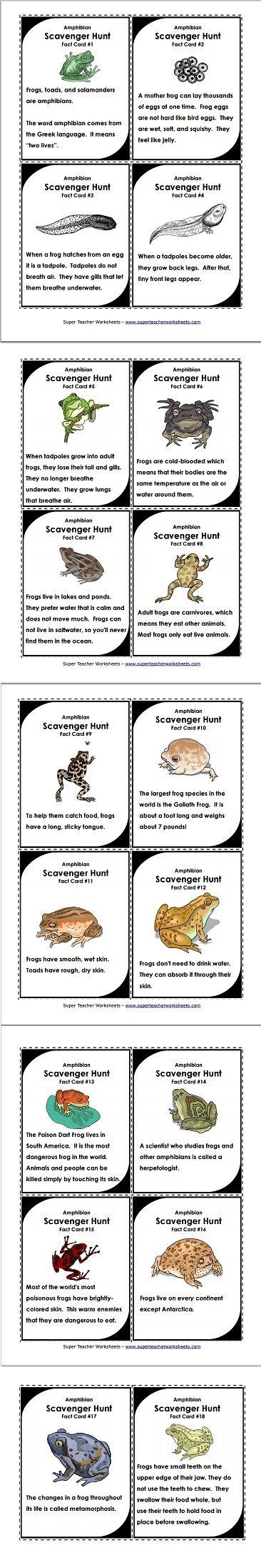 scavenger hunts frogs and hunt 39 s on pinterest. Black Bedroom Furniture Sets. Home Design Ideas