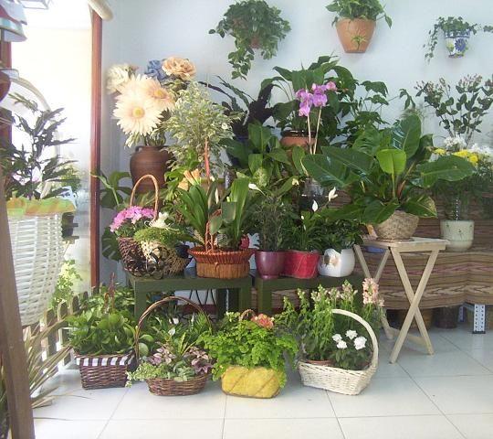 Elige bien tus plantas de interior