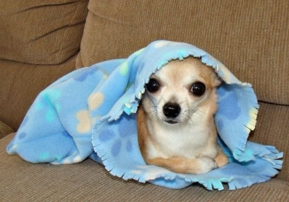 Large Cuddle Sack for Dogs & other Pets 15-30 pounds - Pick your fabric. $20.00, via Etsy.