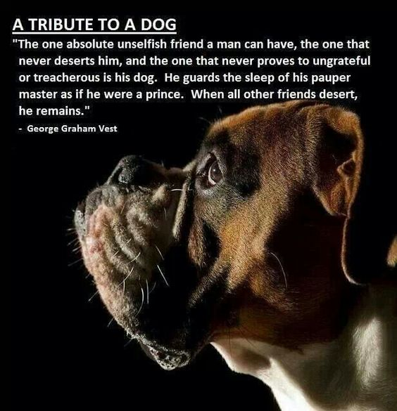 A tribute to a dog: