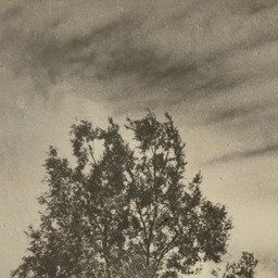 #GreteStern. Dream No. 22: Last Kiss. 1949 | MoMA