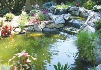 POND Sources – Water Treatments – Algae – Causes and Cures