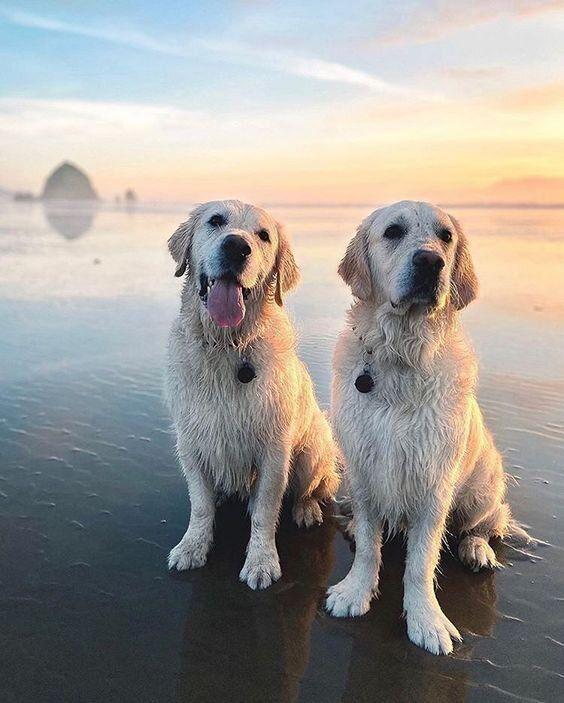 Today S Beach Pretty Moments In 2020 Golden Retriever Beach Dog