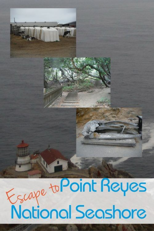 Escape to the Shores of Point Reyes - Traveling Mom