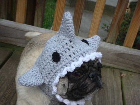 Shark Fin Dog Hat/ Made to Order. $20.00, via Etsy.
