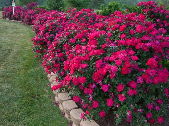 Amazing flower bed border ideas flowers pinterest for Amazing flower gardens