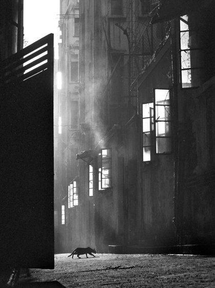5 Lessons Fan Ho Can Teach You About Street Photography Fan Ho