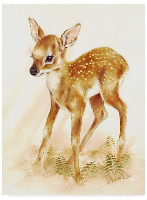 Trademark Global Peggy Harris Fawn Canvas Art 24 Animal Paintings Canvas Art Animal Art