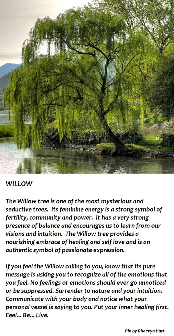 The Willow tree illustrated above is represented by the death of Ophelia and the location where she drowned.