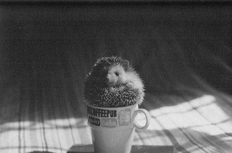 little hedgehog hehe