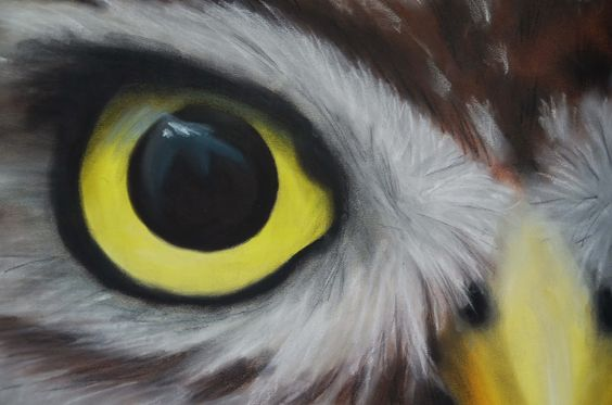 Blog KvA: Tekening - Vogels