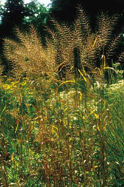What Kind Of Grass Will Grow Under Oak Trees : Planting under oaks and other deciduous trees that allow some light to