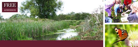 Stotfold Mill Nature Reserve