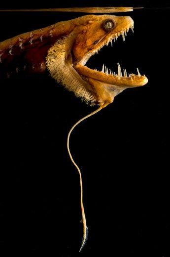 Le creature degli abissi: il progetto fotografico