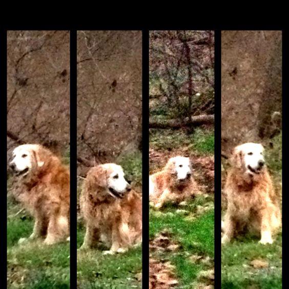 The spirit dog In motion.