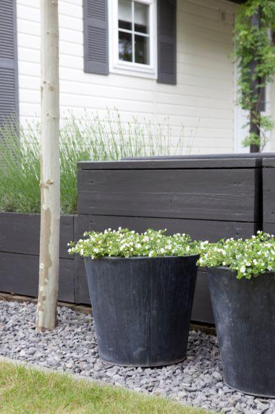 Lead planters contemporary design idea for garden for Low maintenance planter ideas