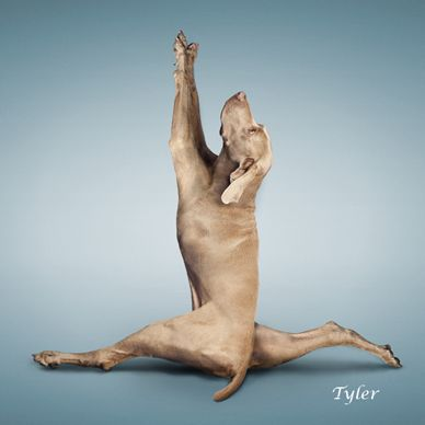yoga_dog
