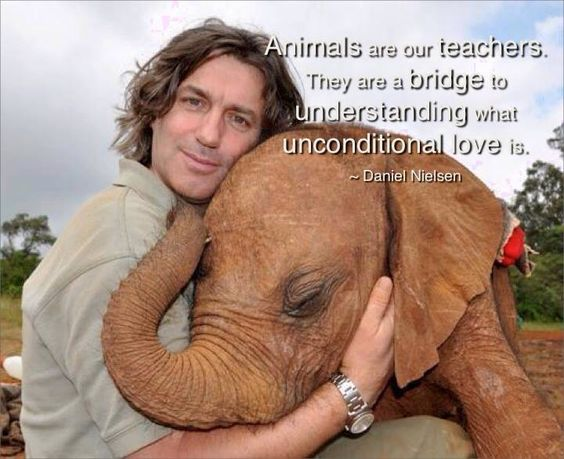 There is an inherent goodness and innocence in animals that we seldom find in people. They are devoid of being self-centered and don't display the many negative characteristics that we often find in human nature, responding to love & affection. I believe animals to be our greatest teachers. By their very existence and demonstration, they are a bridge to understanding what unconditional love is: