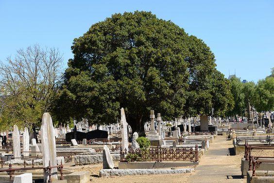 Melbourne General Cemetery, Melbourne, Australia.