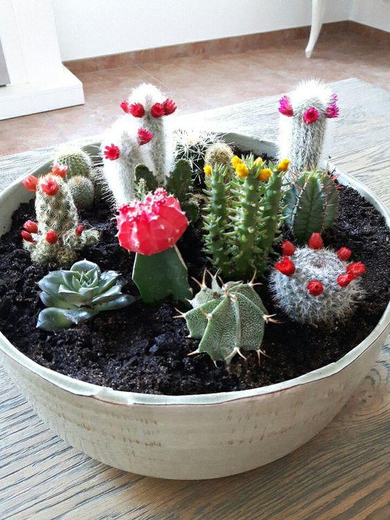 cactus ♡