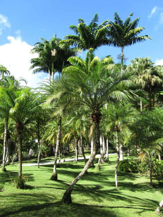 Jardin de balata martinique martinique antilles for Jardin balata