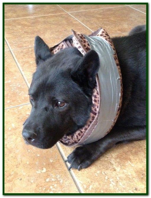 How To Make A Homemade Dog Cone Collar Diy Dog Collar Dog Cone