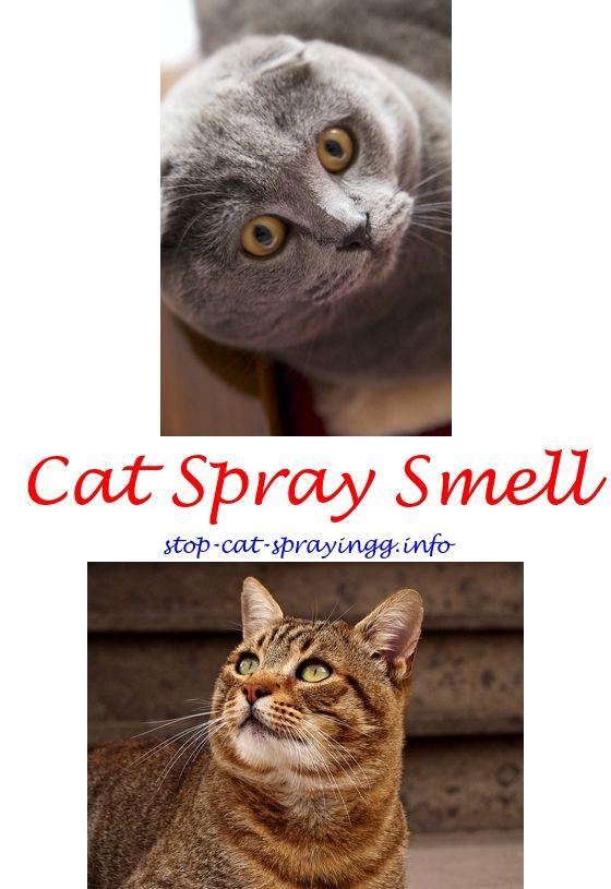 Wooden Boat Plans Uk Cat Urine Cat Spray Cats