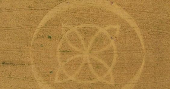 Marcas misteriosas em plantações de trigo voltam a aparecer em Ipuaçu, SC