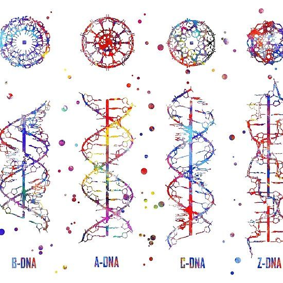 A B C Z Dna Dna Molecule Watercolor Dna Dna Molecule Z Dna