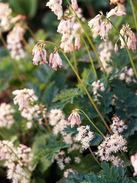 The Best Perennials For Shade Beautiful Shade Plants