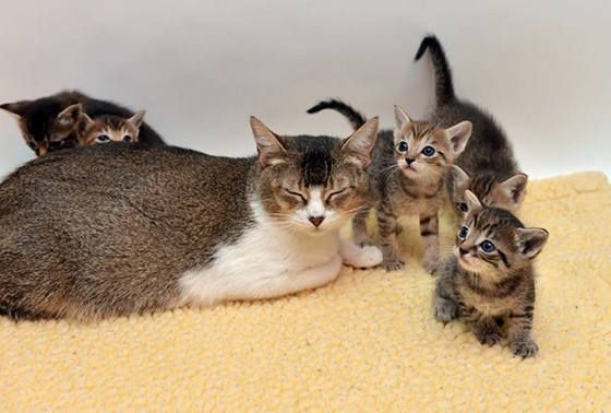 rescue cat and kitten family from tonis kitty rescue