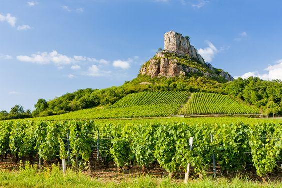 La Bourgogne et ses vignobles #Auxerre ✿✿✿✿✿✿✿✿✿✿✿✿✿✿✿   Découvrez le richesses de la Bourgogne lors de votre séjour à l'Hôtel Cerise Auxerre : http://www.cerise-hotels-resorts.com/fr/cerise-auxerre-presentation.html