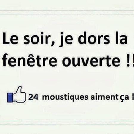Mouches et moustiques - Le-chat-et-la-marmotte.over-blog.com