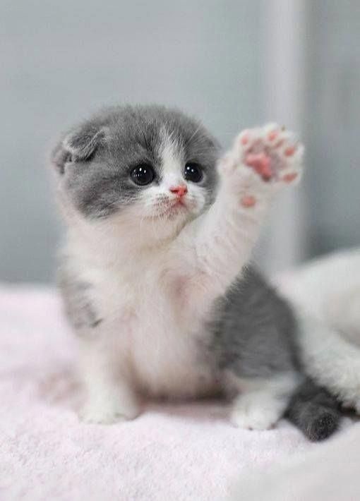 Ugh Can T Get A Minutes Peace Around Here Cute Baby Cats