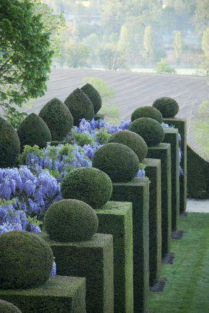Wisteria and box topiary at Chateau de la Ballue
