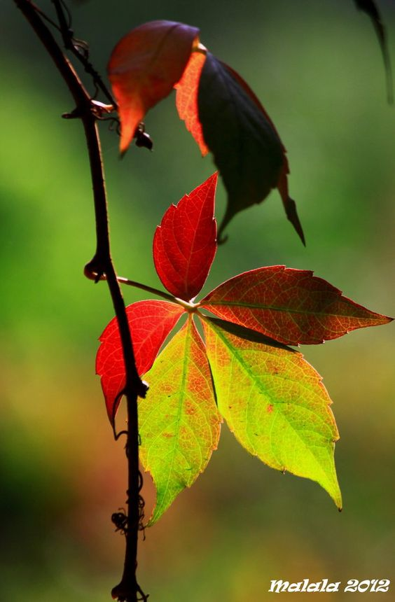 happy september1 by malaladanila
