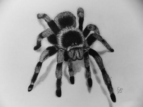 How To Draw A Spider With Pencil Step By Step For Beginners And