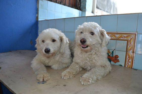 Do amor pelos animais surgiu uma bela iniciativa. Essa é a história de Ana Lúcia Nabinger,  uma protetora particular de cachorros e criadora de um site onde é possível adotar ou mesmo apadrinhar um de seus 82 fiéis escudeiros.