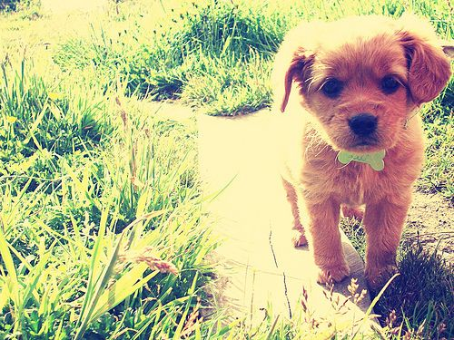 I want this little guy!