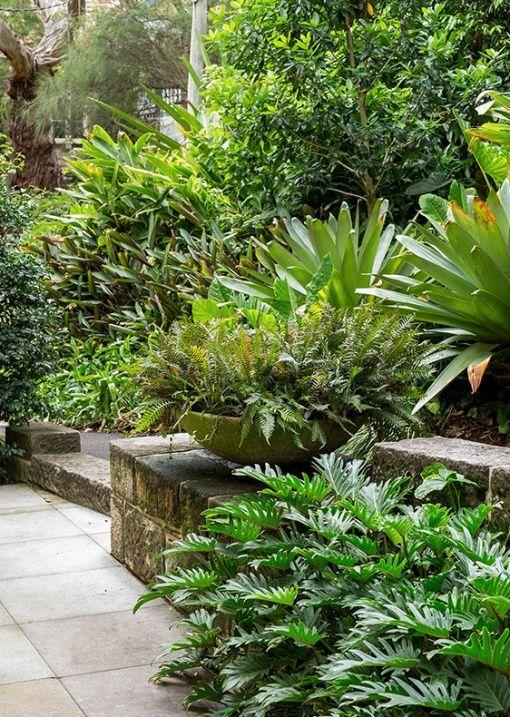 The Bondi Garden Of Landscape Designer William Dangar In 2020 Tropical Garden Design Sloped Garden Tropical Garden