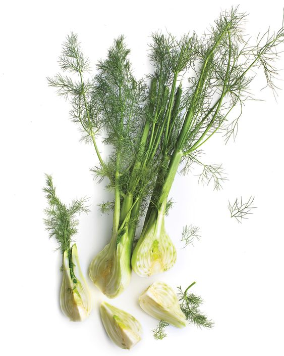 Often likened in taste to licorice, fennel is in fact far more subtle with a texture similar to celery, and, unlike licorice, the flavor is savory, not sweet. Raw, fennel is cool and crunchy. Cooked, fennel turns mellow and the flesh softens; it is wonderful alongside fish or chicken or tossed with pasta.   In Season: Fennel season lasts from mid-fall to early spring.   What to Look For: Fennel is easily identifiable: It has a fat white bulb (like an onion) and a feathery top of green stalks
