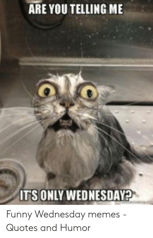 Wednesday Meme Funny : wednesday, funny, Image:, TELLING, TSONLY, WEDNESDAY?, Funny, Wednesday, Memes, Memes,, Humor,