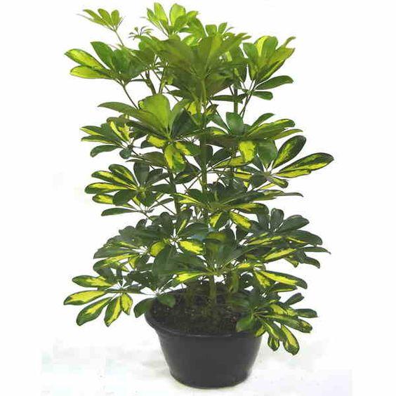 Plantas de interior de casa para decorar mi jardin - Plantas ornamentales de interior ...