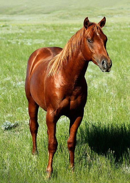 Equine Horse Horselover Http Globalhorsecents Com