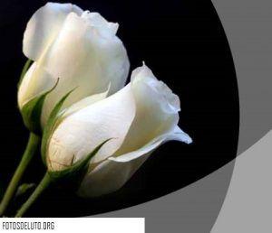 Monos De Luto Con Una Rosa Blanca Rosas Blancas Flores Floral