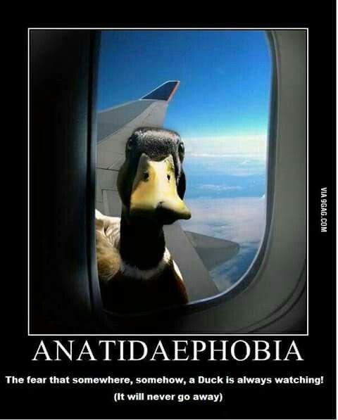 #anatidaephobia #entenangst #flugzeug #wrf