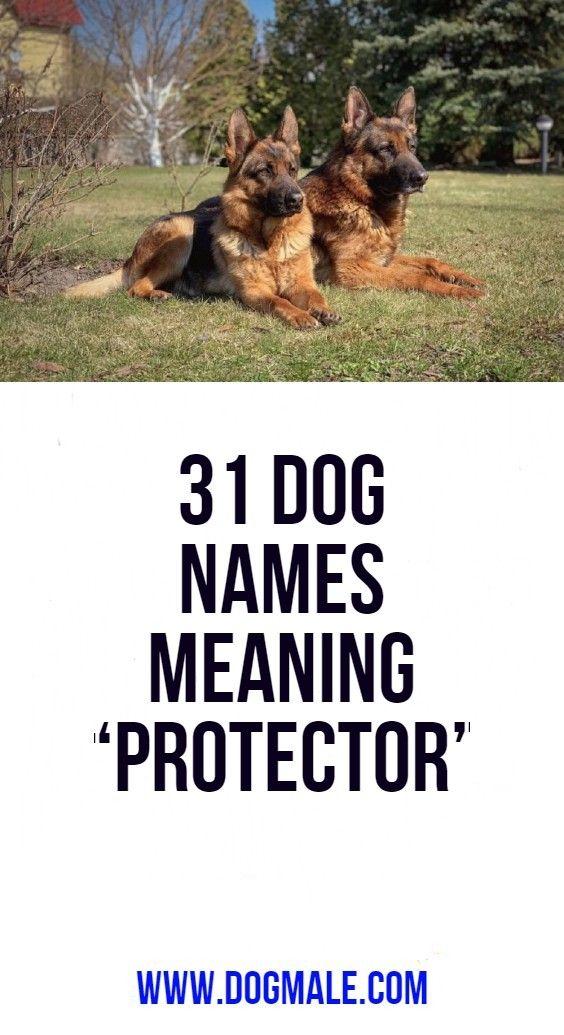 31 Dog Names Meaning Protector Dog Names Dog Names Male Boy Dog Names Unique