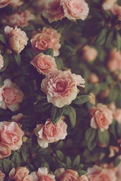 Flowerdose.