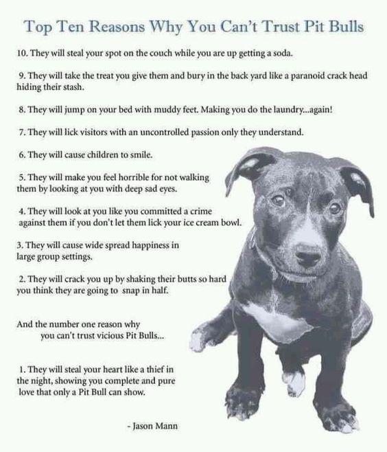 Top Ten Friendly Dogs Pitbull