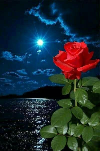 Musique Douce Musique Relaxante Musique De Relaxation Bonne Annee 2020 2020 Musique 2019 Musique Photo Fleurs Photographie De Paysages Fond D Ecran Fleur Rose